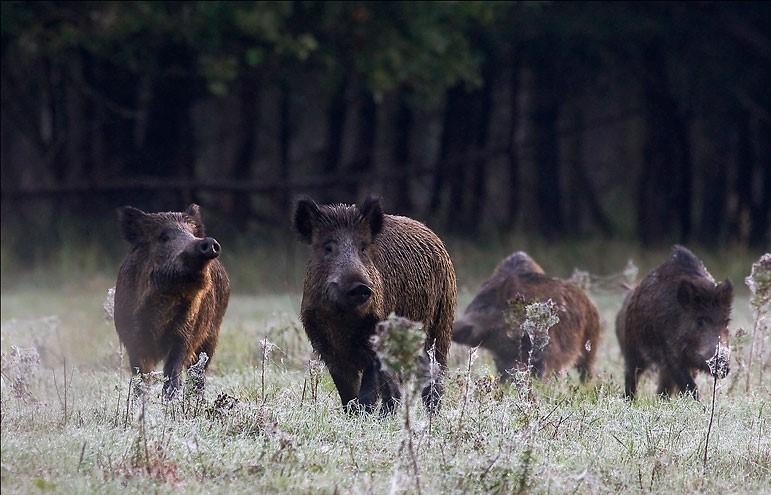 Jagen auf Kahl- und Schwarzwild